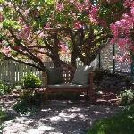 The 87 year old Crape Myrtle Tree