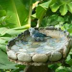 Bird bath 20 feet from my room