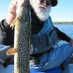 One of the large Northern Pike we caught