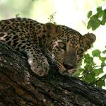 Yala Exotic Tours