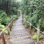  the bushwalk...not for the unfit!