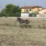 Agriturismo Podere Saliciaia의 사진