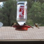 A few of the hummingbirds