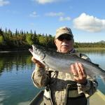  Silver salmon fresh from the sea on Wood River at the outflow of Lake Aleknagik.