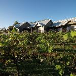 Hermitage Lodge Vineyards