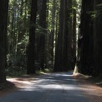 Φωτογραφία: Giant Redwoods RV & Camp