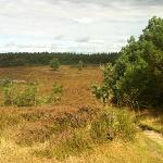  Uitzicht op de Tongerense heide