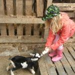 Daughter Heini feeding baby goat.