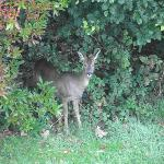 a deer in the garden..wonderful