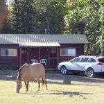Cabin 6&7 with friendly horse.