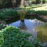 Fish Pond in the gardens