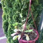 Weeds and Cigarettes butts in flowerpot