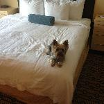  Dog on King Size Bed