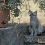 The villa cat