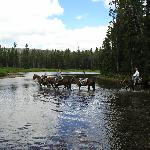 Skyline Guest Ranch and Guide Service, inc.