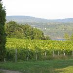 View of vineyards from the Manor