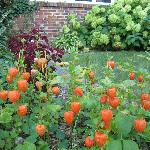 Chinese lantern plant by front door of The Manor