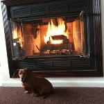 fireplace suite is dog friendly!