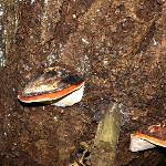 Mushrooms on old tree trunk