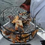 The Packed Crab Pot!