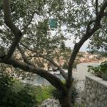Foto de Apartments Olive Tree