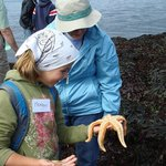 Sea star Marvel during the Plankton, Periwinkles and Predators Tour