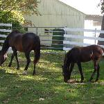 UVM Morgan Horse Farm
