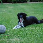 Bella - our beautiful soccer playng border collie