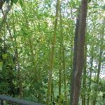 View from balcony obscured by bamboo
