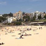 coogee in spring