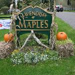  Fall is beautiful at Cavendish Maples