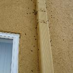  Bugs on the outside of the hotel wall 1