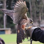 Wingspan National Bird of Prey Centre