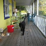 Piper on the screened in porch
