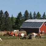  Barn, Horses, and Cows