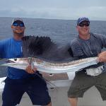  sea horse sailfish