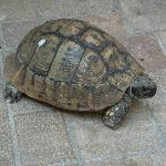 the hostel's resident tortoise