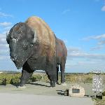  World&#39;s Largest Buffalo