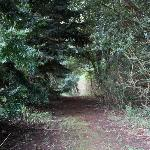  Bush walk right outside your door