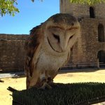 guilas de Ronda (Birds of Prey Show)