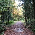 Walkway to the lapland lake