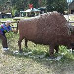 George's Personal Buffalo - the only one nice enough to let you pull her tail!