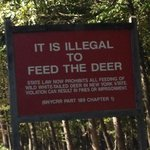 it's illegal to feed the deer ?