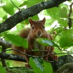 My first encounter of a red squirrel taken on the slopes of Silver How.