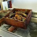  Fresh Lobster to go