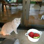 lots of friendly cats at the condo