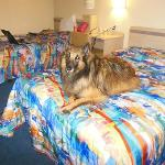 My dog Vinnie loves to stay at the Motel 6.