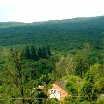  beautiful evergreen forest cleared viewed from balcony