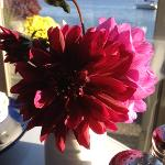  fresh garden flowers on our breakfast table every day