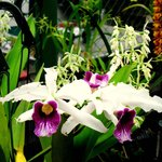 an enormous variety of orchids